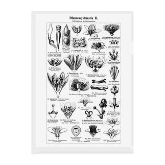 植物の構造2 Clear File Folder