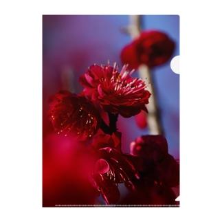 赤い梅(写真) Clear File Folder