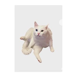 白猫オッドアイのタマ お座りバージョン Clear File Folder