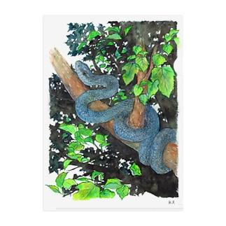 青い木登り蛇 Clear File Folder