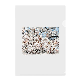 cherryblossoms3_aR Clear File Folder