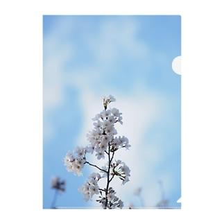 sakura 1 Clear File Folder