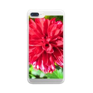 Dreamscapeの秋風ダリア Clear smartphone cases