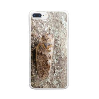 日本の昆虫:アブラゼミ Japanese large brown cicada Clear smartphone cases