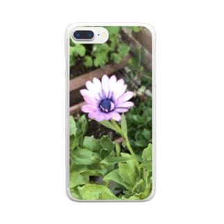 オステオスペルマム Clear smartphone cases
