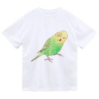 首傾げセキセイインコ ピーちゃん【まめるりはことり】 Dry T-shirts