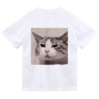 ジョリーマンダリンのSneezing cat Dry T-Shirt