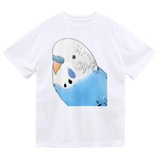 見つめるセキセイインコちゃん【まめるりはことり】 Dry T-shirts
