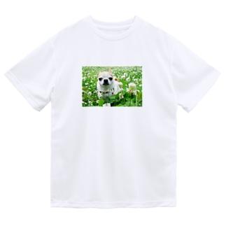 カラフルチワワ(クローバー) Dry T-Shirt