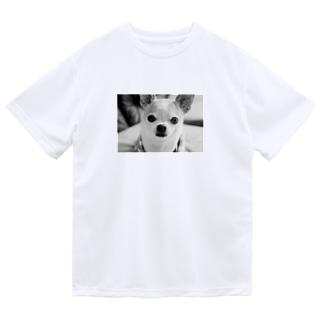 モノクロチワワ(おすまし) Dry T-Shirt
