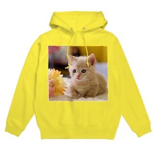 子猫 フーディ