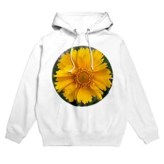 黄色い花 フーディ