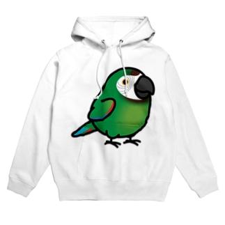 Chubby Bird コンゴウインコ フーディ