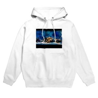 aquarium Hoodies