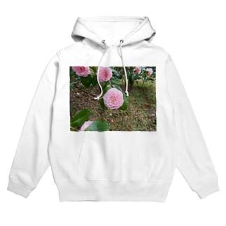 Pale pink camelia blooming カメリア Hoodies