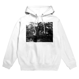 forest  Hoodies