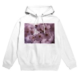 桜 サクラ cherry blossom DATA_P_092 Hoodies