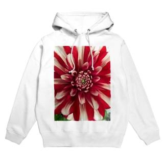 bloom Hoodies