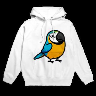 Cody the LovebirdのChubby Bird ルリコンゴウインコ Hoodies