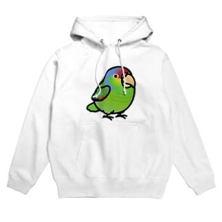 Chubby Bird  フジイロボウシインコ Hoodies