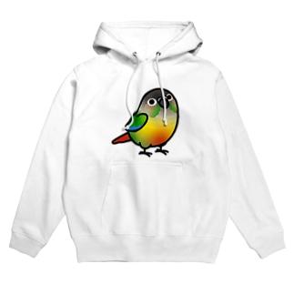 Cody the LovebirdのChubby Bird ウロコインコ Hoodies