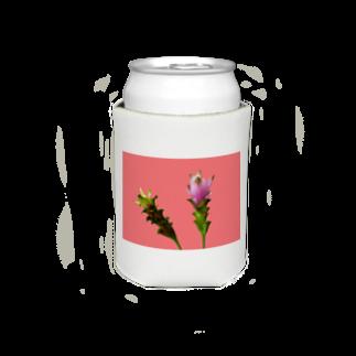 CALAKUEN(SOIL)のCurcuma alismatifolia -pink Koozies