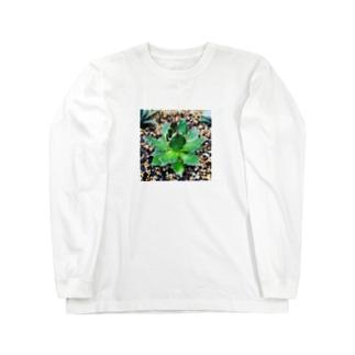 アガベのホリダ君 Long sleeve T-shirts