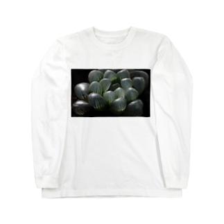 ハオルチア オブツーサ系4「ドドソン紫オブツーサ」 Long sleeve T-shirts