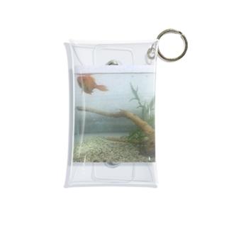 まやの金魚水槽🐠 Mini Clear Multipurpose Case