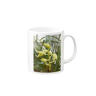 シンビジウムの蕾の写真 Cymbidium blossoms マグカップ