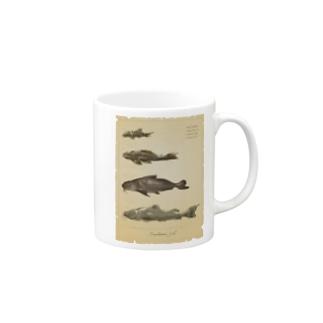 魚類画帳(淡水魚) マグカップ