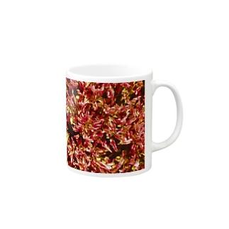 グラウンドカバーNo.1 Mugs