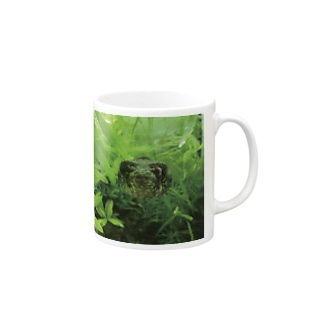 水族館のフグ(正面) Mugs
