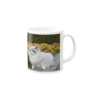 春の終わりに Mugs