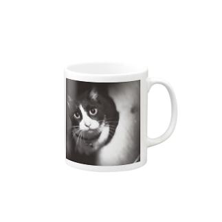 白黒 猫 実写 Mugs