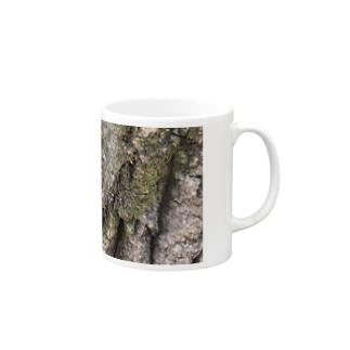 歳月を感じる樹木 Mugs
