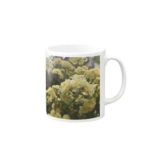 Rosa banksiae マグカップ