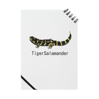 タイガーサラマンダー ノート