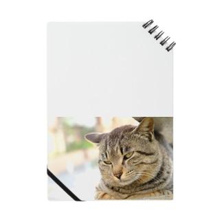 猫のファンサービス Notes