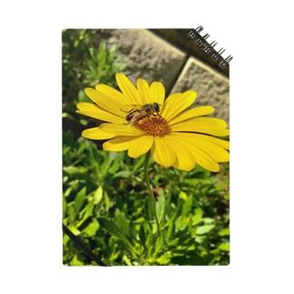 蜂と花 Notes