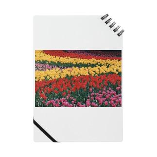 虹色の道 Notes