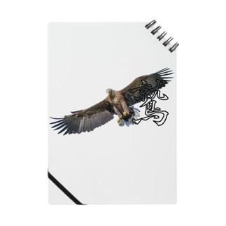 大空を羽ばたく鷲! Notes
