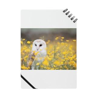 動物コレクション Notes