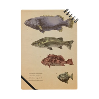 魚類画帳 Notes
