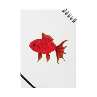 赤い金魚 Notes