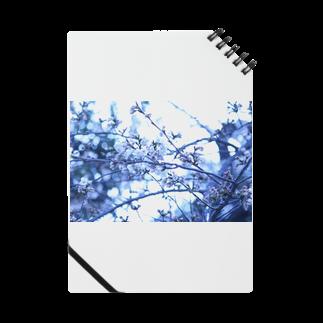 Kengo Kitajimaの桜 Notes