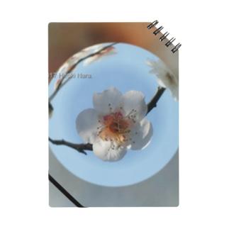 光景 sight737 梅  花 FLOWERS  宙玉(そらたま) ノート