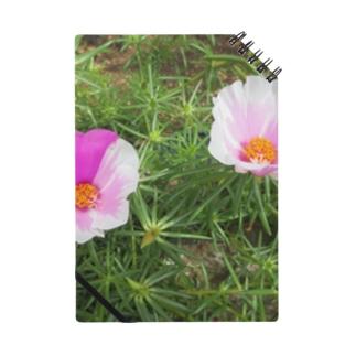 ピンクのマダラちゃん Notes