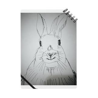 Peter rabbit Notes