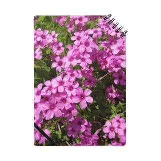野の花の可憐さ・・・ Notes